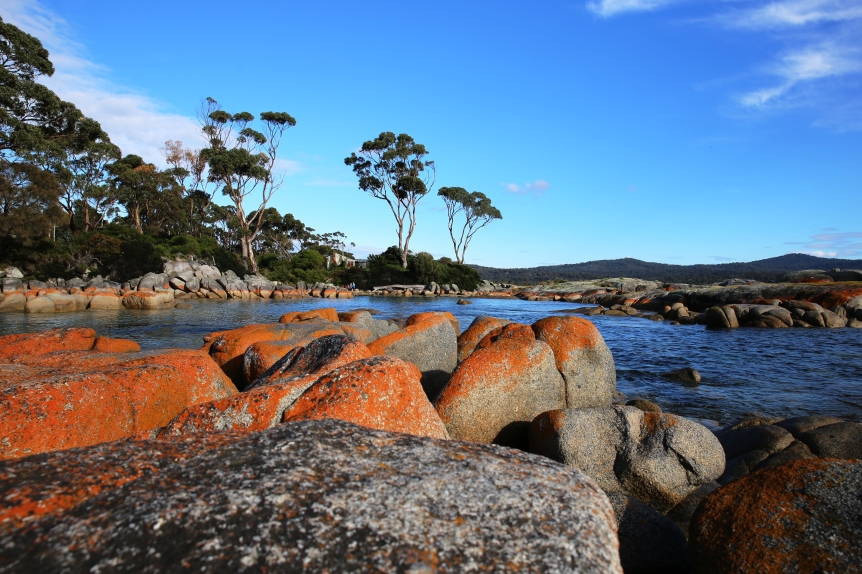 Bay of Fires. The orange colour is a lichen peculiar to the area.