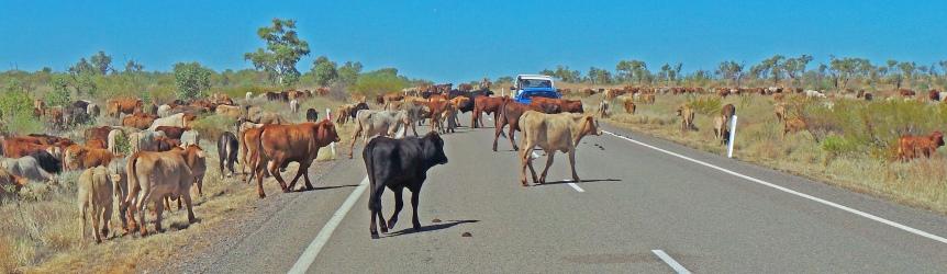 Barkly Highway. Road Hazard.