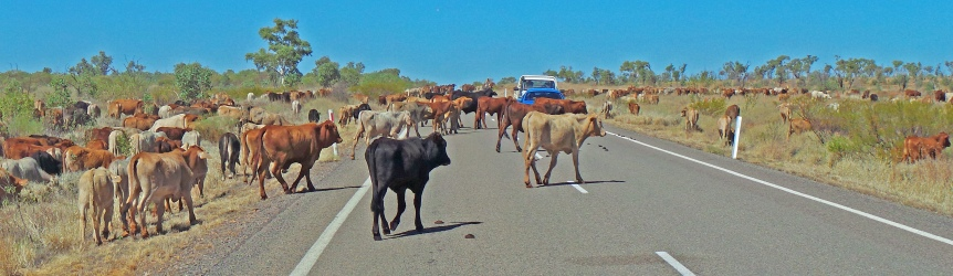 Barkly Highway. Road Hazard.