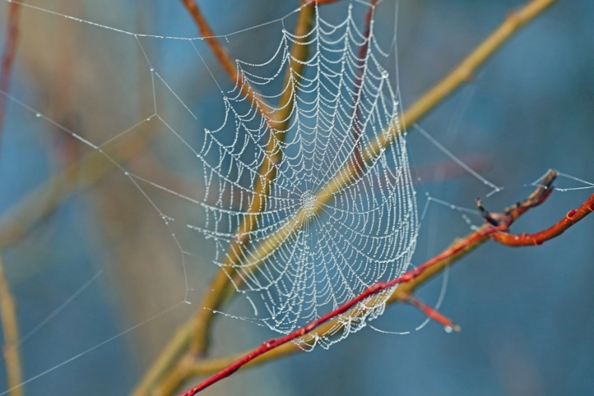 Dew on a web - at the same location as the Platypus.