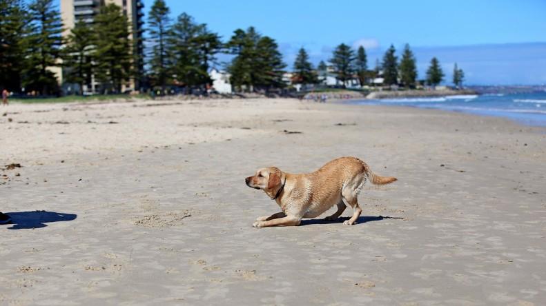 fun-at-the-beach-kids-animals-04