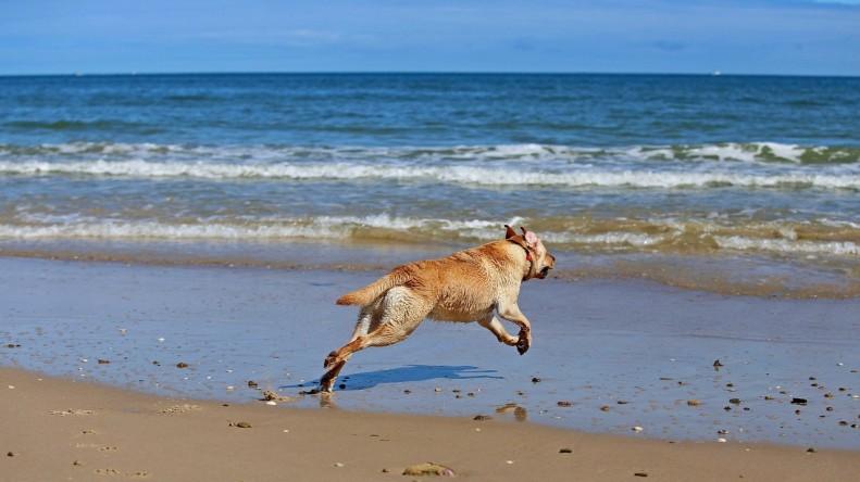 fun-at-the-beach-kids-animals-06